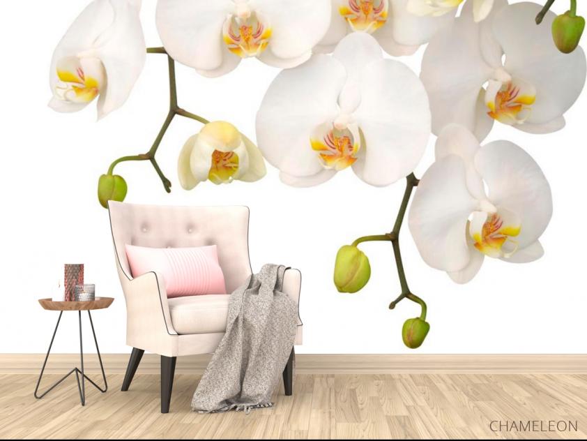 Фотообои Орхидеи белые и бутоны - 4