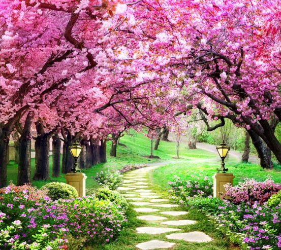 Фотошпалери Рожеві дерева 22343