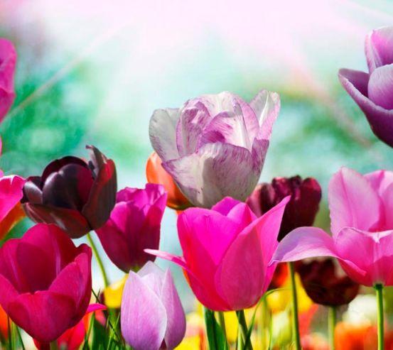 Фотообои Тюльпаны редких цветов 5888