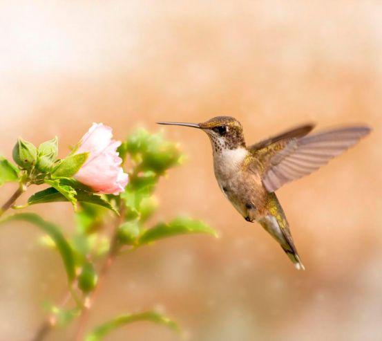 Фотообои Полет колибри 12785