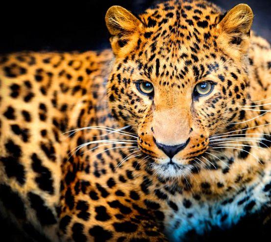 Фотообои Гепард на охоте 10794