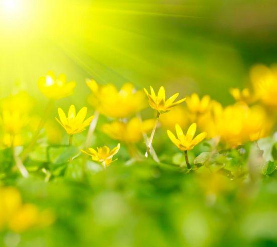Фотообои Пролиски желтые 1319