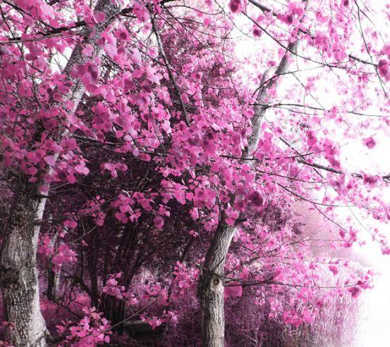 Фотообои Розовое дерево 17637