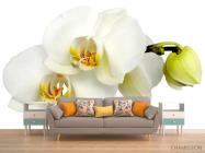 Фотообои Орхидеи желто-белые - 1