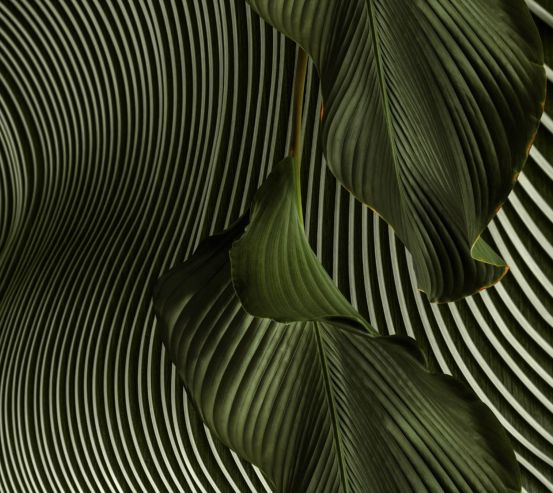 Фотообои Стильные листья 26719
