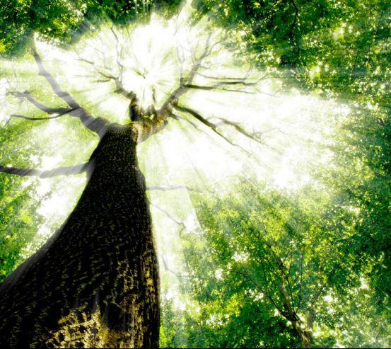 Фотообои Дерево, свет 8832