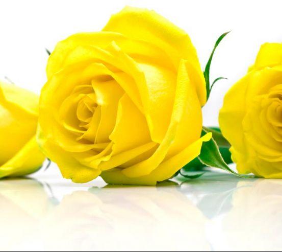Фотообои Розы желтые 4956