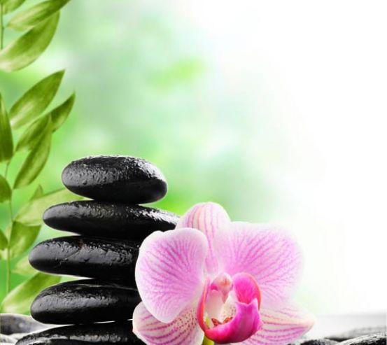 Фотообои Орхидея на камнях 6620