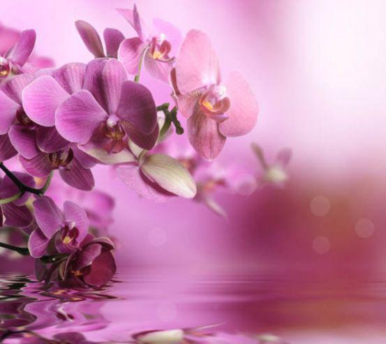 Фотообои орхидеи 13707