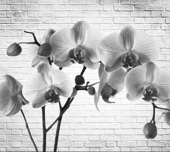 Фотообои Орхидея 19315