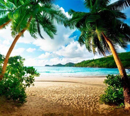 Фотообои  Пляж и пальмы 12807