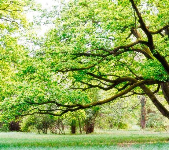 Фотообои Много веток, дерево 0826