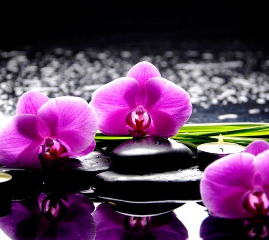 Фотообои Орхидеи на камнях 5966