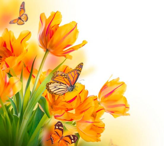 Фотообои Тюльпаны 13373