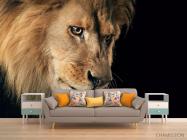 Фотообои морда льва - 1