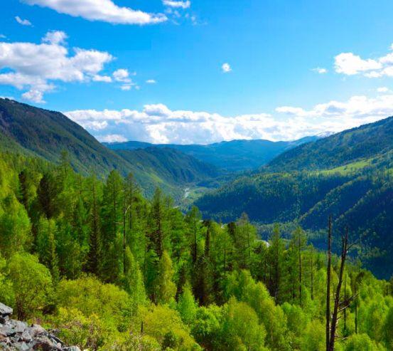 Фотообои Через горы, лес 9500