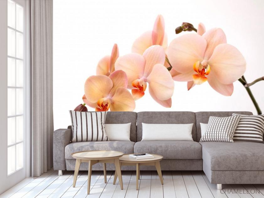 Фотообои Веточка орхидей - 3