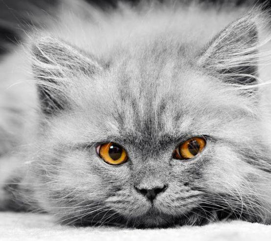 Фотообои Серый котенок 5791