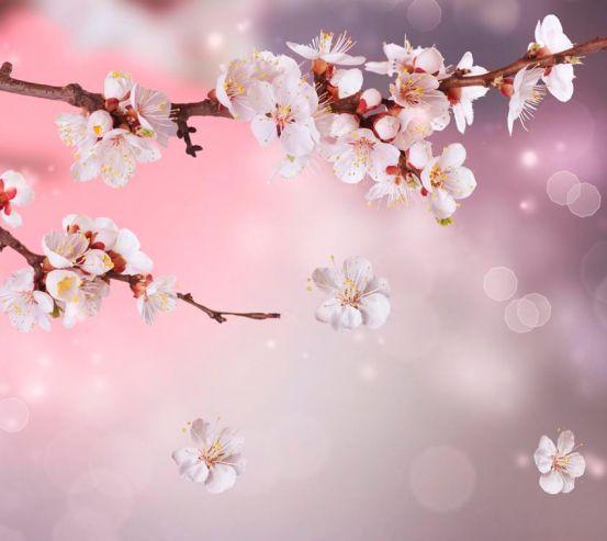Фотообои Полевая вишня цветет 1407