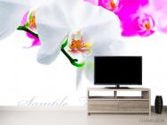Фотообои Бело-розовые орхидеи - 2