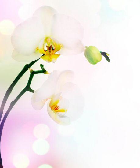 Фотообои Цветущий абрикос