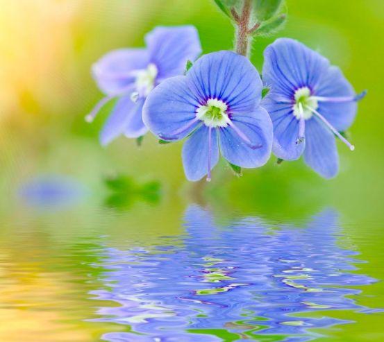 Фотообои Голубые цветы 4569