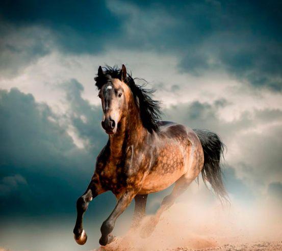 Фотообои Бегущая лошадь 13317