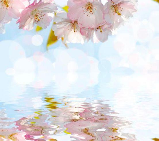 Фотообои Цветущая вишенка 1404