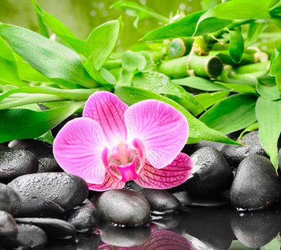 Фотообои Орхидея на камнях 4608