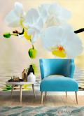 Фотообои Белоснежные орхидеи в воде - 4