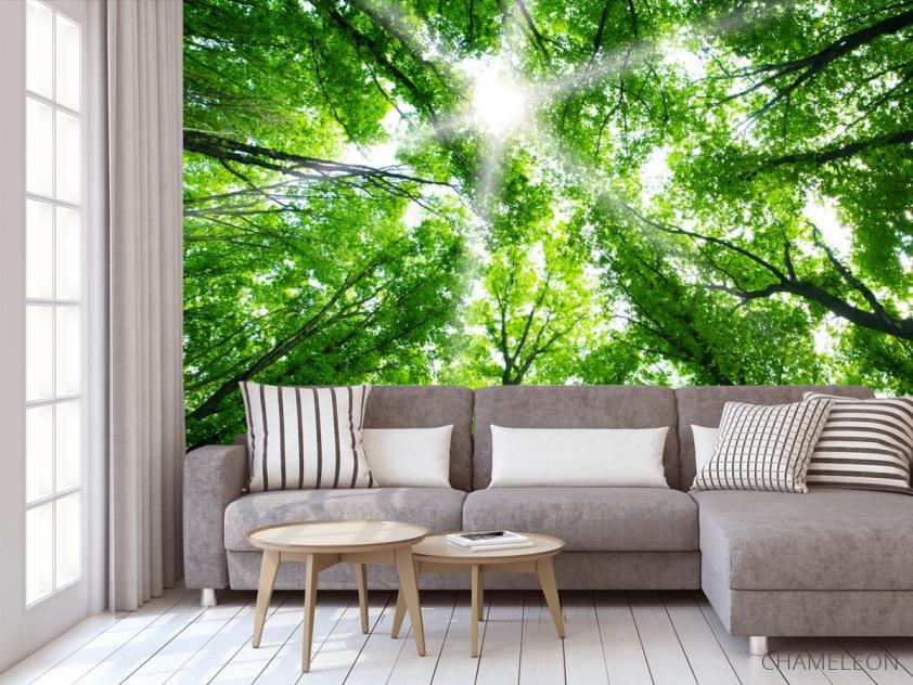Фотообои свет свозь кроны деревьев - 3
