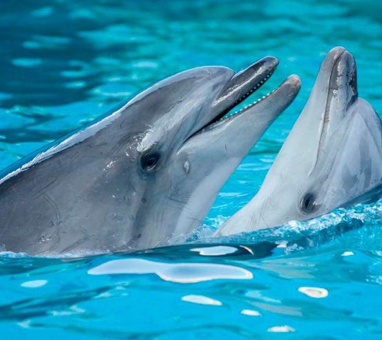 Фотообои Нежность дельфинов 8477