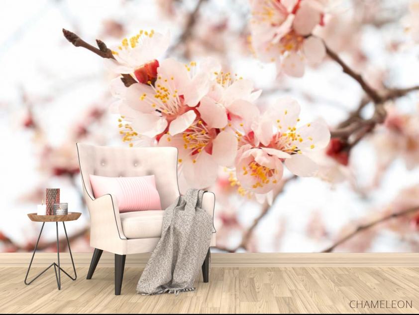 Фотообои Цветущий абрикос весной - 4