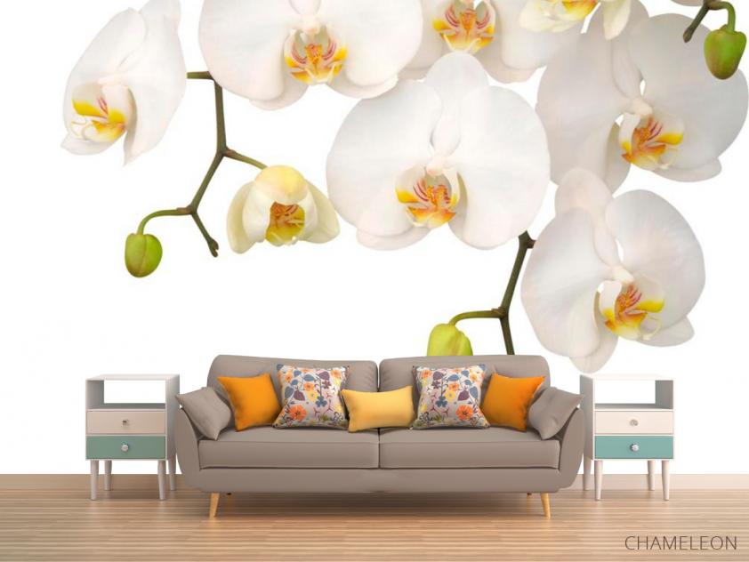 Фотообои Орхидеи белые и бутоны - 1
