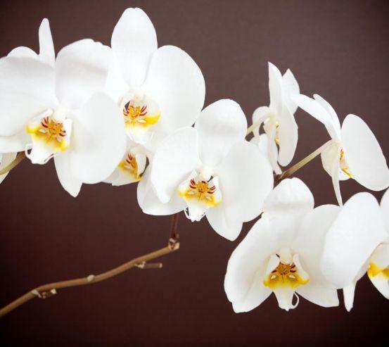 Фотообои белая орхидея 20359