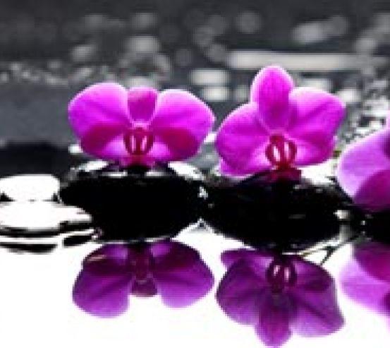 Фотообои фиолетовые орхидеи на камнях 21195