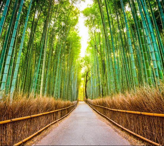 Фотошпалери Бамбуковий гай 24443