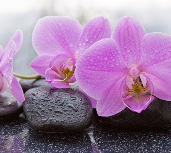 Фотообои камни и орхидеи 21322