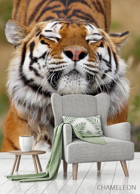 Фотообои тигр потягивается - 3