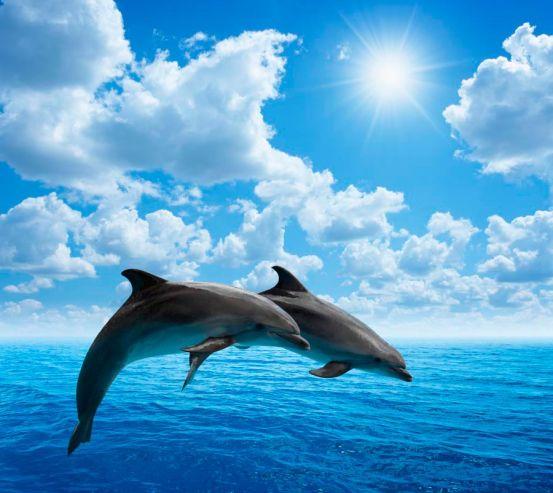 Фотообои Прыжки дельфинов 11844