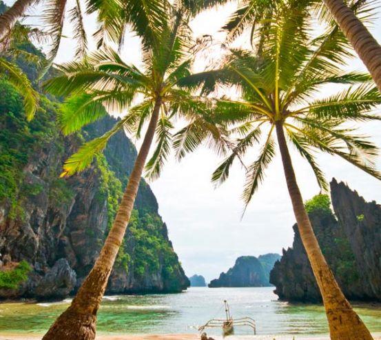 Фотообои Столик и пальмы 11605