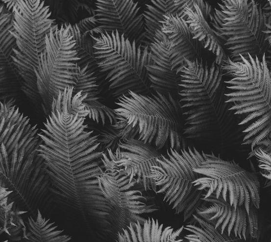 Фотообои листья 20161-h