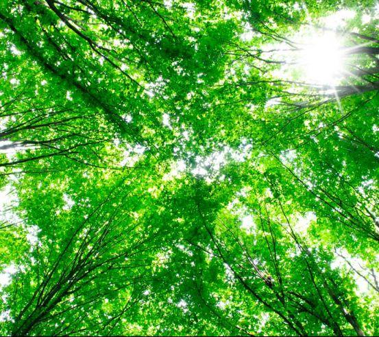 Фотообои Деревья, свет 11977