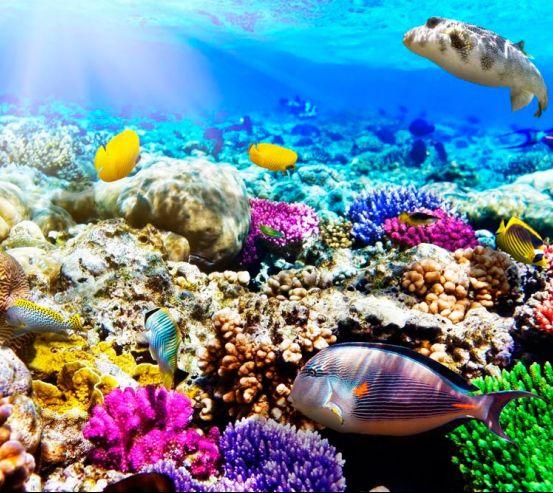 Фотообои Подводный мир 11841
