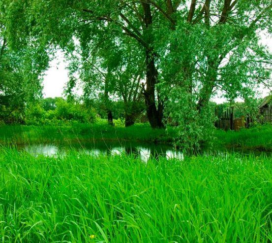 Фотообои Высокая трава 3065