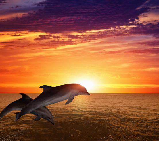 Фотообои Дельфины, море и закат 20874