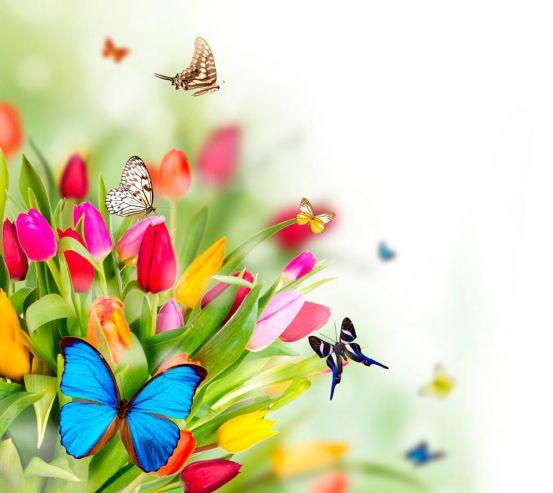 Фотообои Тюльпаны и бабочки 13784