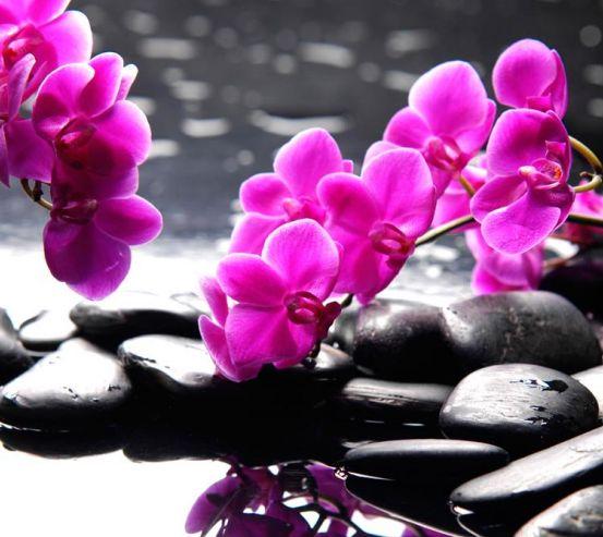 Фотообои Розовые цветы и камни 7661