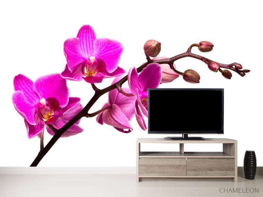 Фотообои Веточка розовой орхидеи - 2