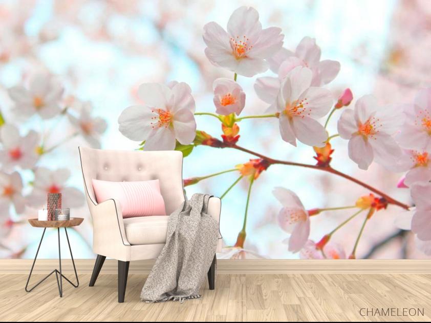 Фотообои Цветет абрикос весной - 4